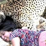 بالصور .. امرأة تنجو من الموت بعد 3 دقائق بين أنياب فهدين