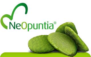 accueil_NeOpuntia