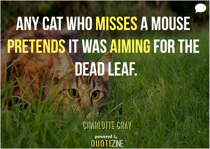 Funny Quotes About Cat Lovers : More: Birthday Quotes 30 Wise and Funny Ways To Say Happy Birthday