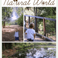 Connecting with the Natural World  Racheous - Lovable Learning
