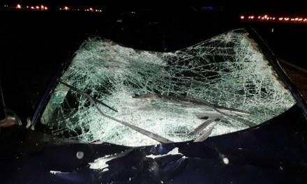 Se le cruzaron tres caballos en autopista, chocó a uno y causó otro accidente