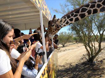 Inicia nueva temporada de Eco-Safari en el Centro Ecológico de Sonora