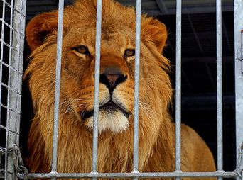 Prohíbe en Sonora uso de animales en circos