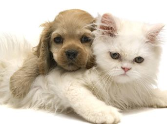 El mes de agosto entra en vigor un reglamento para venta de perros y gatos en Hermosillo, aquí te dejamos algunos detalles del reglamento.