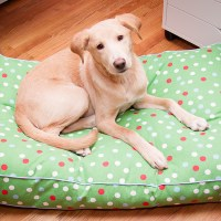 Introducing Wyatt and his new dog bed!