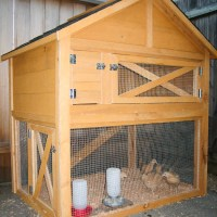 Aging Chickens