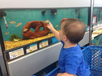 The fish were swarming him!