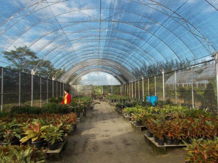 bangka-botanical-garden-5