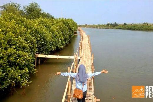 Hutan Mangrove Kulonprogo (sumber gambar: http://setapakpesona.blogspot.co.id/2016/06/belajar-tentang-alam-di-hutan-mangrove.html)