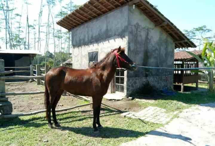 kuda-tunggang-bhumi-merapi