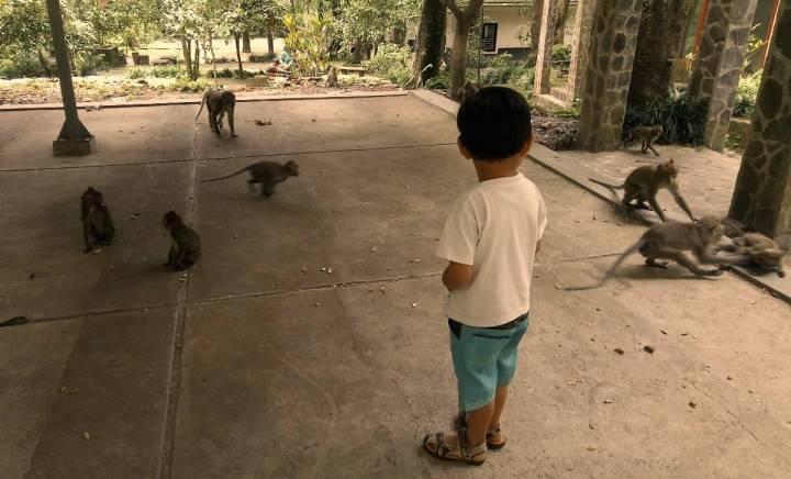 Monyet di Hutan Wisata Kaliurang