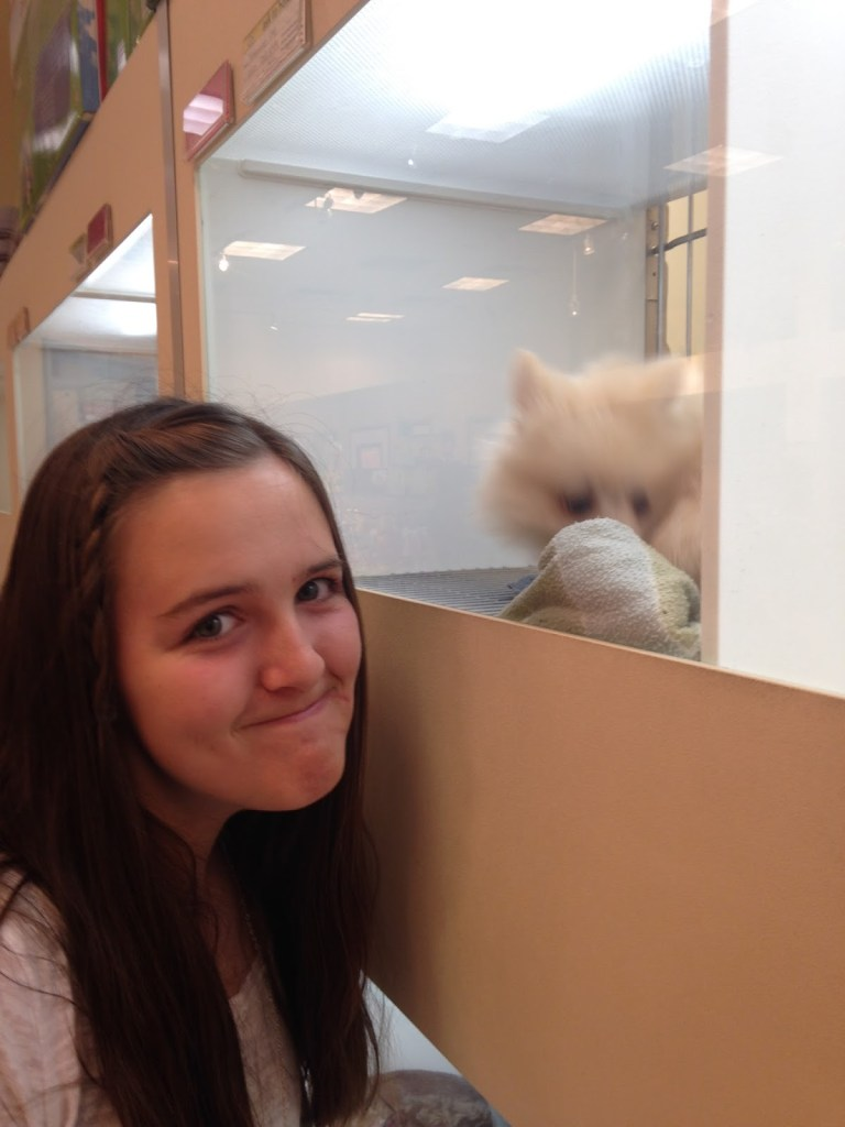 Bailey at the puppy store at the mall (I didn't actually get one)