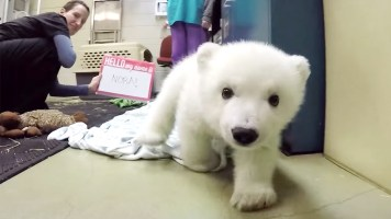 A Polar Bear Cub Gets Her Name From 115 countries