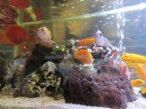Feng Sushi Fish