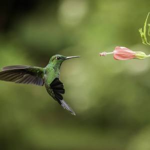 attract-hummingbird