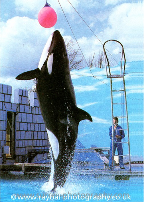Orca - Windsor Safari Park. - Epsom Photographer Advertising Commercial