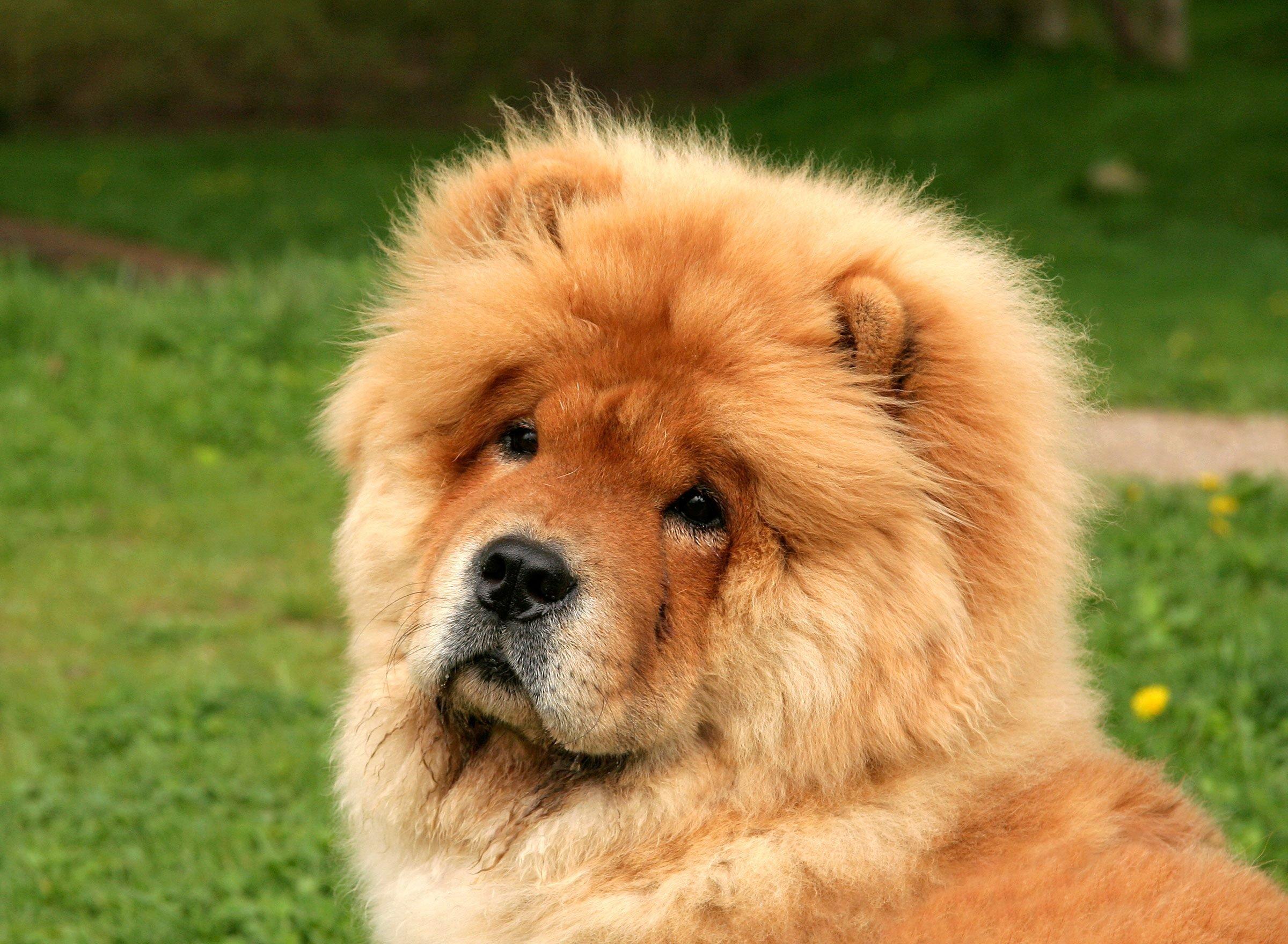 Fullsize Of Weird Dog Breeds