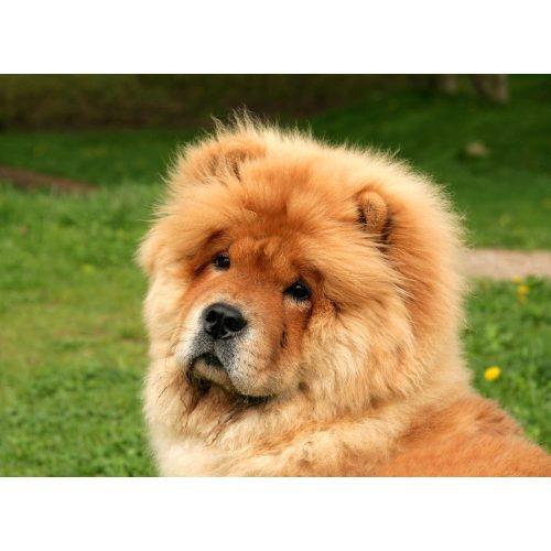 Medium Crop Of Weird Dog Breeds