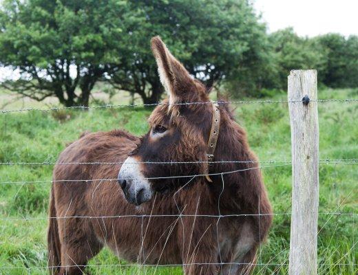 donkey_reading_my_tea_leaves_IMG_0927