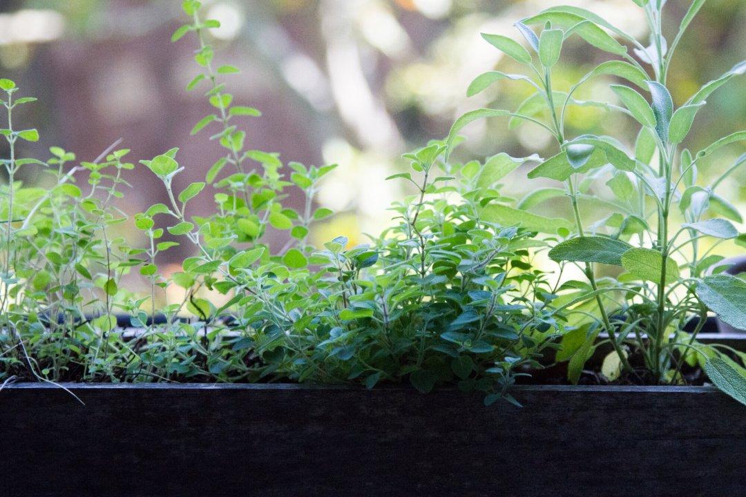 herbs_reading_my_tea_leaves_IMG_2072.jpgIMG_2063