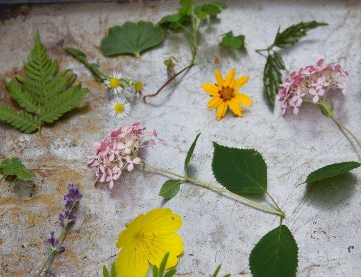 sunprints_reading_my_tea_leaves_IMG_1705