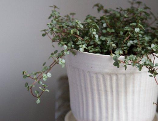 tiny_plants_reading_my_tea_leaves_IMG_3313