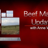 Beef Market Update - Calf Prices Slip With Light Correction and the Annoyance of Pre Sliced Steak