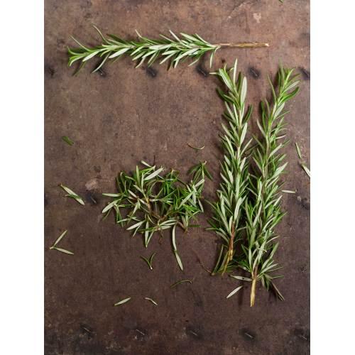 Medium Crop Of How To Harvest Rosemary