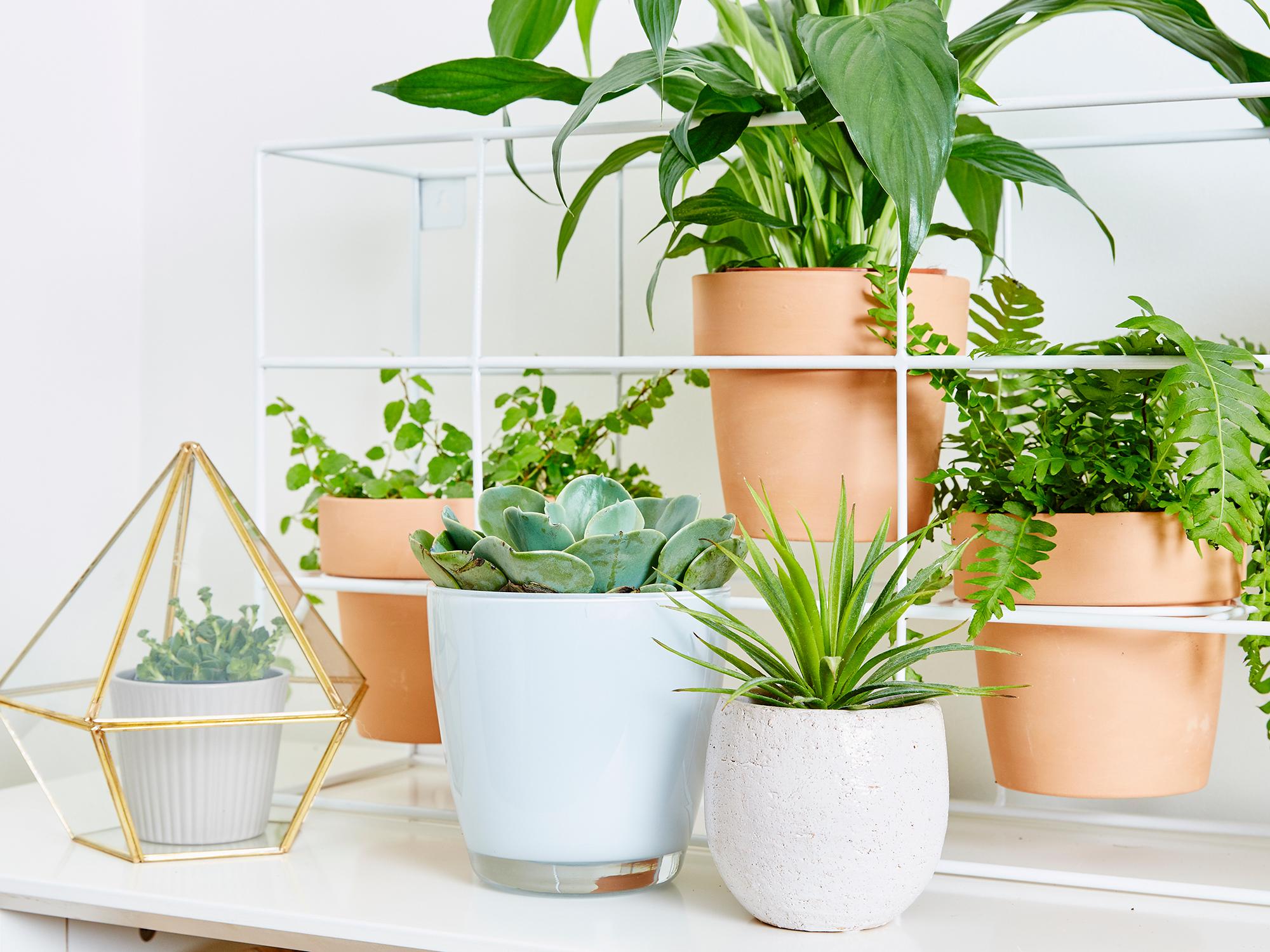 Snazzy How To Create An Garden Creating An Garden Create An Garden garden Creating An Indoor Garden