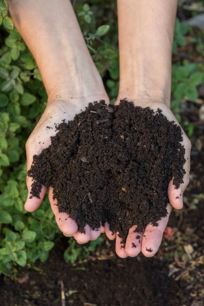 Homemade compost
