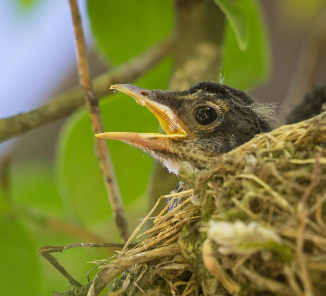 Lilla, alone in the nest