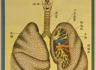lung health and chinese herbs