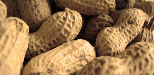 high-oleic peanuts reduce body fat and increase fat oxidation