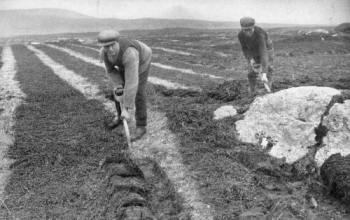 Lazy beds (feannagan) use only half the soil are for planting. The English experts were sure this was inefficient and land-wasting. Plowing was imposed on Ireland, and famine followed