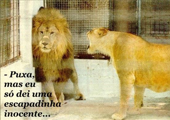Recado Facebook Leãozinho