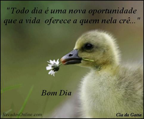 Recado Facebook Bom dia patinho!
