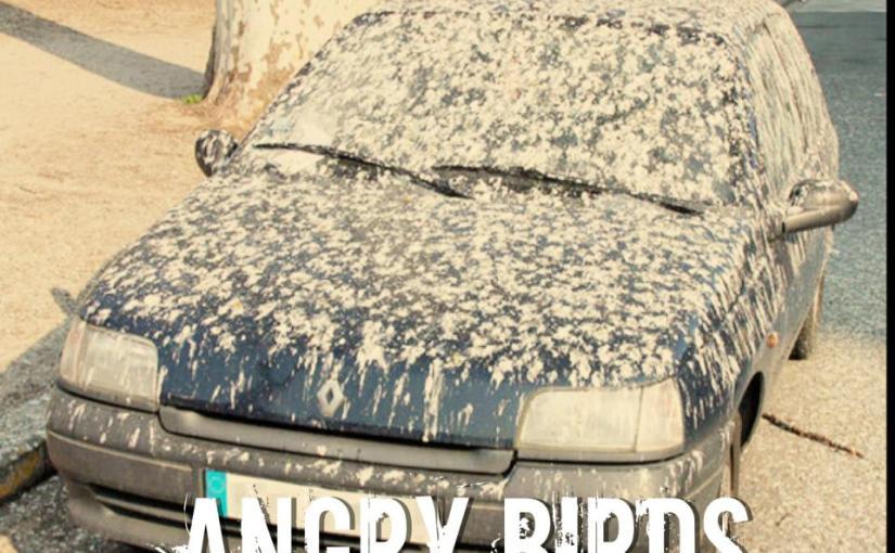 Angry Birds da vida real….