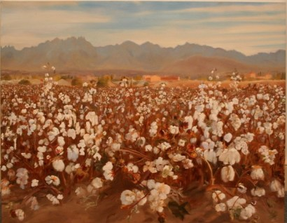 cotton-field