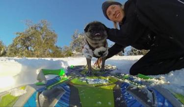 Animals,aww,Cute,Dog,Funny,gopro,pet,Pets,pug,Silly,snow boarding,Sports