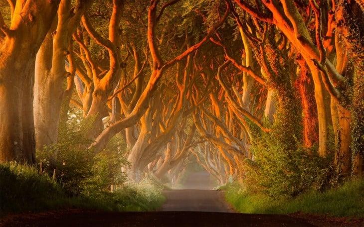 Ciemne Cetos w Irlandii