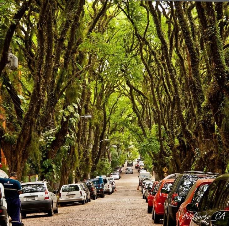 Tunel drzew w Rua Goncalo de Carvalho w Brazylii