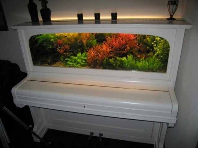WOW! This is a very exquisite recycled piano aquarium. The aquarium in