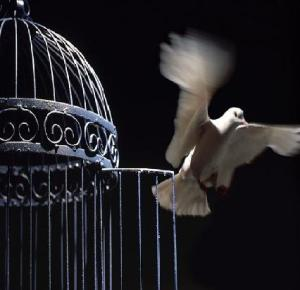 bird freed from cage