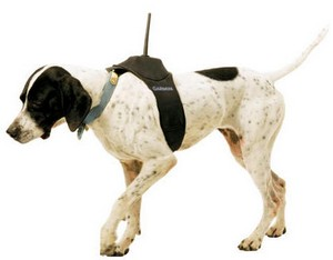 garminastrodogtracker small Garmin Astro GPS Dog Tracker   keep tabs on the pooch in long grass