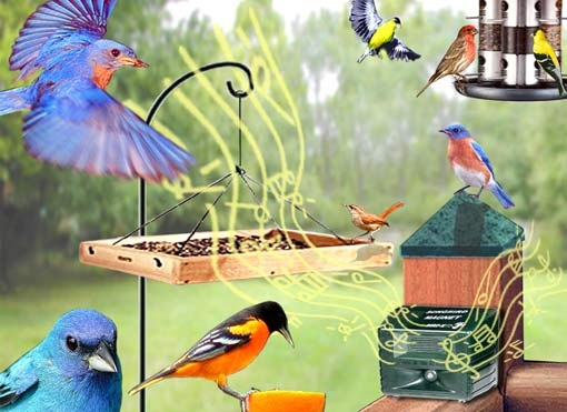 SongbirdMagnet Songbird Magnet will have all the birds singing to your tune