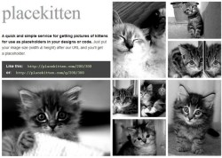 Placekitten – unimaginable amounts of cuteness as free placeholders for your web designs
