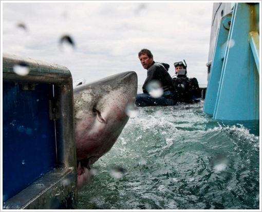 ocearch5 Ocearch   amazing open source great white shark tracking for conservation research...v cool