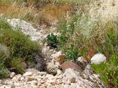 Settler_sewage_in_Wadi_Fuqeen