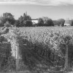 Wines_6