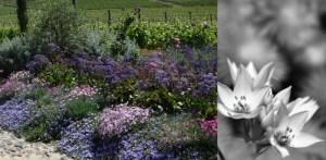 gardens_header